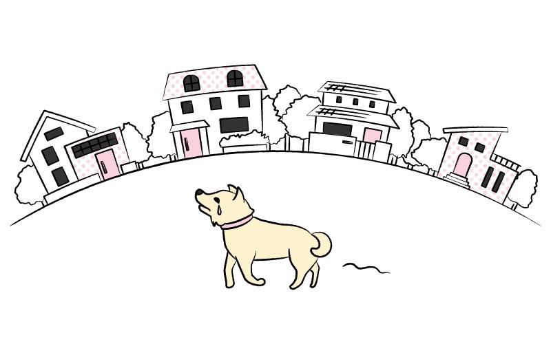 街をさまよう迷子の犬